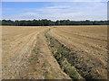 TL3450 : Farmland, Wimpole, Cambs by Rodney Burton