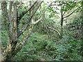 SM9240 : Cwm Felin by Rob Burke