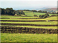 SE0342 : Dry stone walls, Steeton Moor by David Spencer