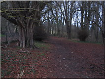 SU9894 : Woods north of Chalfont St Giles by Pip Rolls