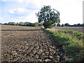 TL0635 : Farmland, Flitton, Beds by Rodney Burton