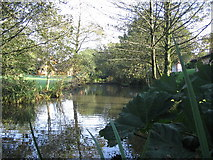 SX0876 : The duckpond at Hengar Manor by Phil Williams