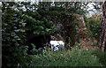 SX3489 : Disused Canal Bridge near Bridgetown 1978 by Crispin Purdye