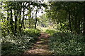 SP9938 : Greensand Ridge track by Iain Macaulay