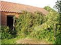 TF9731 : Overgrown derelict barn by David Williams