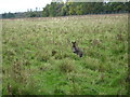 TL0116 : Wallaby at Whipsnade. by Robin Hall