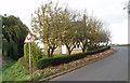 TF4905 : Boyces Bridge:  roadside planting of Impatiens by Dr Charles Nelson
