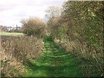 NT0787 : Path by Paul McIlroy