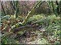 SX0456 : Valley bottom woodland by Tony Atkin