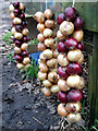 SW3824 : New season onions for sale at Crean Bottoms by Sheila Russell