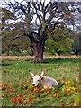 NU0726 : Chillingham Wild White by Stuart Wallace