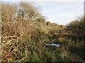 SW3624 : Scrubby, marshy woodland near Bosistow by Sheila Russell