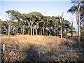 NY0320 : Tutehill Wood south end. by John Holmes