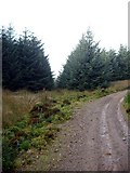 NS6736 : Forest track and firebreak in Dungavel Forest by Gordon Brown