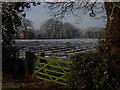 SJ8074 : Farmland at the eastern end of Common Farm Lane, Chelford by Colin Park