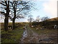 SD9121 : Bridleway near Ditches Farm above Walsden by michael ely