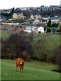 SE2418 : Low Farm and Thornhill Edge by Nigel Homer