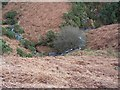 NY2122 : Coledale Beck. by John Holmes