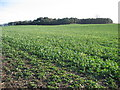 SE9757 : Farmland at SE970578 by Stephen Horncastle