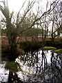 SU2105 : Wintry pond north of Berry Wood, New Forest by Jim Champion