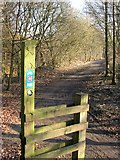 SD7804 : Irwell Sculpture Trail by Keith Williamson