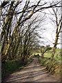 SW4030 : Lane to Bosence Farm by Sheila Russell
