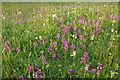 SO8641 : Wild orchids and cowslips in a field near Levent Lodge, Earl's Croome by Philip Halling