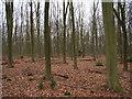 SU8967 : Beeches, Swinley Park by Andrew Smith