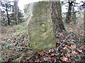 SK5383 : Boundary Stone S by Michael Patterson