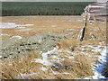 NY7449 : Long Moss by Andrew Smith