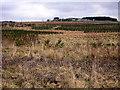 NS8369 : Reforestation Near Drumbow by Iain Thompson