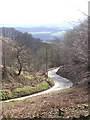 ST1437 : Crowcombe Combe looking SW ; steep road from Crowcombe by Martin Southwood