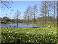 SJ3786 : Marie Curie Field of Hope, Sefton Park by Sue Adair
