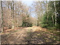 SU9793 : Hodgemoor Wood by Andrew Smith