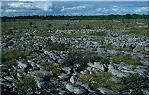 R3688 : Limestone pavement at Pollduff by Mike Simms