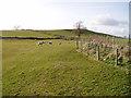 SD5281 : Pasture near Overthwaite farm by David Gruar