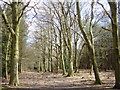 SJ5566 : Primrosehill Wood near Tirley Hollow by Sue Adair