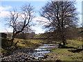 NY7539 : River South Tyne by Andrew Smith