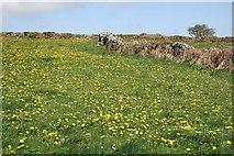 SW6935 : Fields near Carnmenellis by Tony Atkin