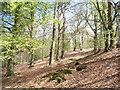 SU9688 : Beeches near Hillmotts Farm by Andrew Smith