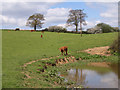 SU9687 : Pastures near Hedgerley by Andrew Smith