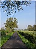SE8376 : Rillington Low Moor by Stephen Horncastle
