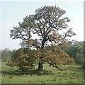 SJ6073 : Hefferston Grange by Jo Lxix