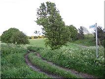 TL3021 : Benington: Road Used as a Public Path by Nigel Cox