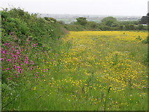 SW5530 : Buttercup Meadow, Packet Lane by Sheila Russell