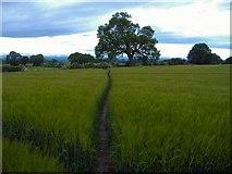 SJ5074 : Alvanley - path through barley. by Mike Harris