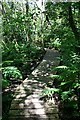 SW6437 : Raised Walkway in Pendarves Woods by Tony Atkin