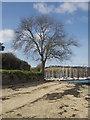 SW8235 : Riverside tree, Mylor by Tim Green