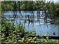 TL3069 : Marsh Lane Gravel Pits, Hemingford Grey by Stephen McKay