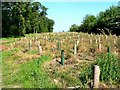 SE9644 : Replanting in Heads Plantation by Roger Gilbertson